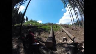 Praca w lesie &  Ścinka