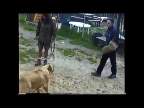 Guard dogs  FAIL (Presa, Fila, CAS, Neo) - Don't believe the hype - Require proof
