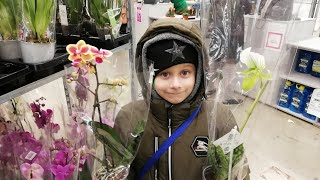 Орхидеи на Фуд сити. Мильтонии по 500р. В продаже есть Тилландсии