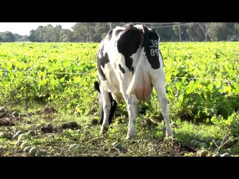 Australia dairy farms and emissions