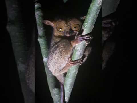 Borneo Natural Sukau Bilit Resort - Sukau - Malaysia