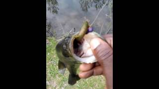 LARGE MOUTH BASS TIPS 2016