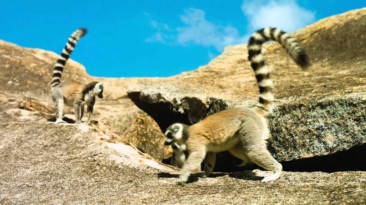 Island Of Lemurs Madagascar Youtube