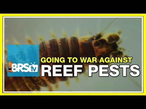Week 49: How To Prevent And Treat Reef Tank Pests | 52 Weeks Of Reefing