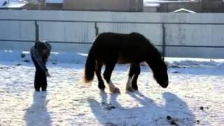 Лошадь ложиться по команде