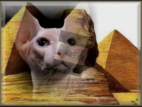 Вопрос: Почему кошка священное животное для турков?