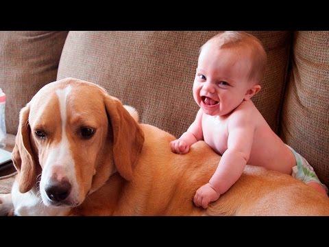 собаки и дети: подборка для хорошего настроения