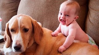 Маленькие дети и собаки - Small children and dogs - Сборник приколов