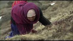 Himalayan Gold Rush @ Himalayan Film Festival