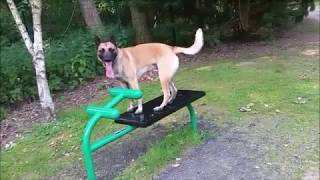 The Floor is Lava dog