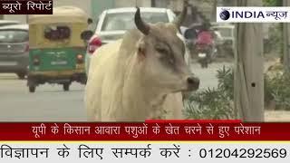 योगी सरकार गायों का संभालने में दिख रही नाकाम   || NATIONAL INDIA NEWS