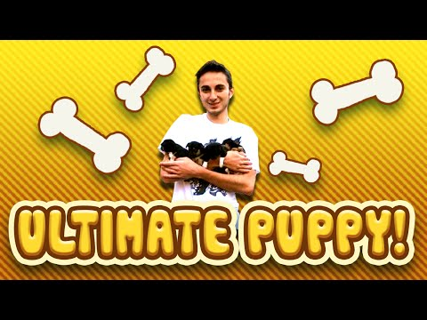 PUPPY VLOG - Funny Puppies playing! (Captain, Crazy Craft, Voids Wrath)