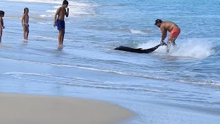 Family Rescue Dolphin On Beach