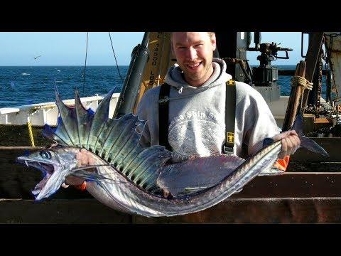STRANGEST Fish On Earth!