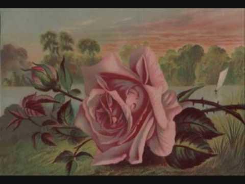 Don Williams - The Rose / Now With Lyrics