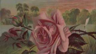 Watch Don Williams The Rose video