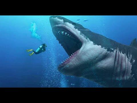 Cá Mập Trên Phim Và Ngoài Đời Thực Khác Nhau Như Thế Nào?