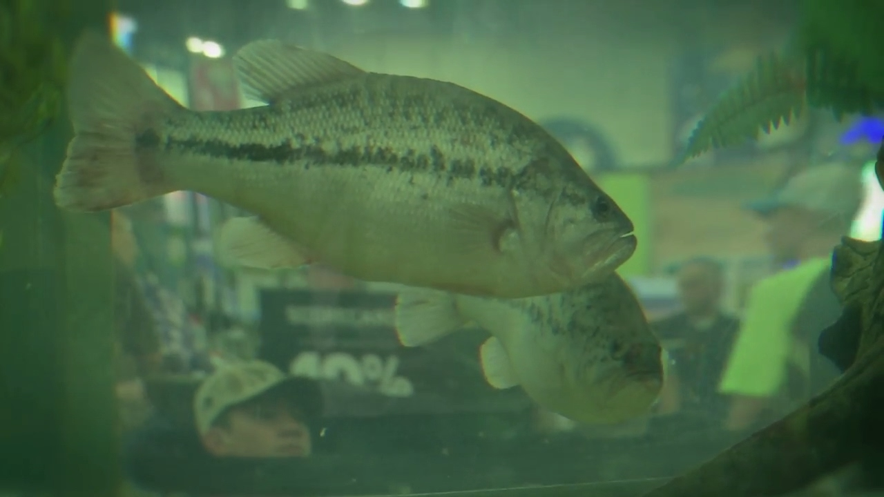2017 bassmaster classic at the dicks sporting goods for Dicks sporting goods fishing