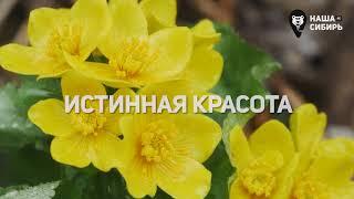 PROMO: Наша Сибирь 4К