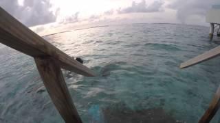 Surprised Mama with a trip to the Maldives! | !فاجأت أمي برحلة للمالديف
