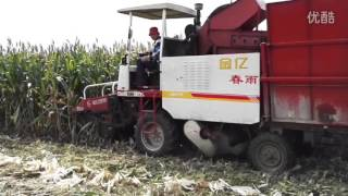 Chinese farmer corn harvester
