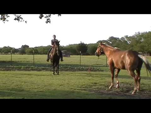 More One Rein Horse Riding- Rope Halter NO Bit- Saddle Check- Girl Gets Dragged No Helmet