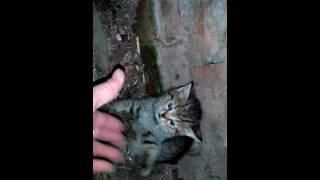 Котёнок против собаки.  Ржака! Дерзкий и борзый!)))