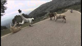 Roller skater crashes into sheep at high speed-TOP 3 Fails Downhill 2015