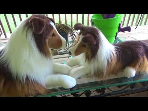 Unboxing Lassie Large Stuffed Animal Youtube