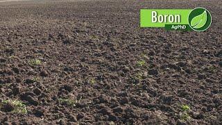 Video Boron #1026 (Air Date 12-3-17) download MP3, 3GP, MP4, WEBM, AVI, FLV Januari 2018