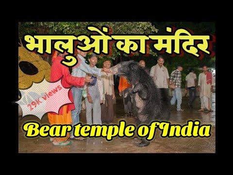 Bear temple |