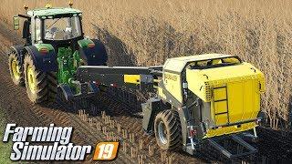 Prasowanie topoli energetycznej - Farming Simulator 19 | #46