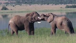 Socio-Ecology of African Elephants