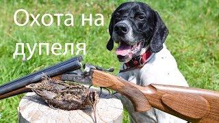 Охота на дупеля с английским пойнтером видео