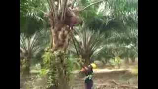 Motorized Cutter for Palm Oil