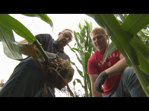Root Research | What If... | NET Nebraska