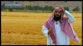Истории о пророках: Сулейман - часть 2, Узейр (мир им)(Видео-передача