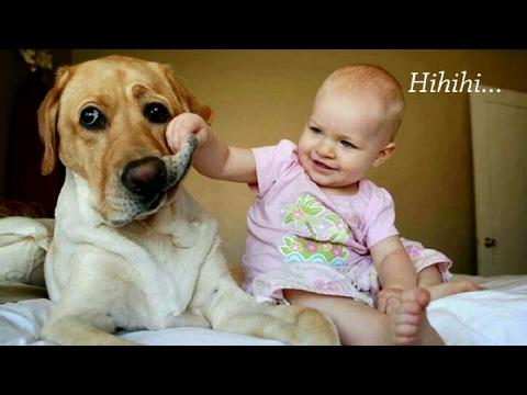 Kesetiaan dan kecintaan seekor anjing pada Bayi