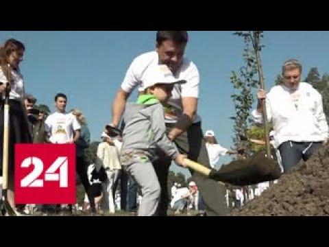 В Подмосковье посадили сотни тысяч елей, лип и лиственниц