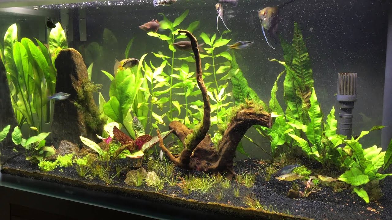 New fluval fresh f90 planted aquarium - YouTube