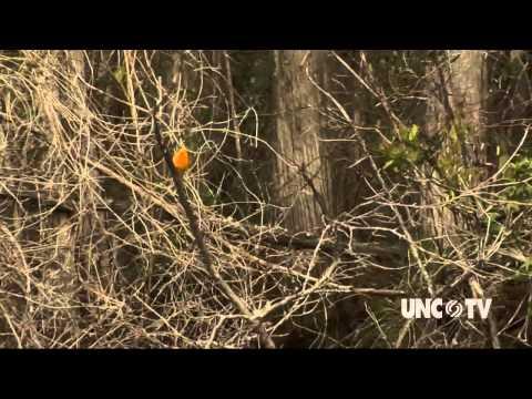 Coastal Kayak Touring Company   The Fitness Files   NC Now   UNC-TV