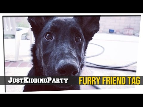 Furry Friend Tag ft. Brandon and Ronin