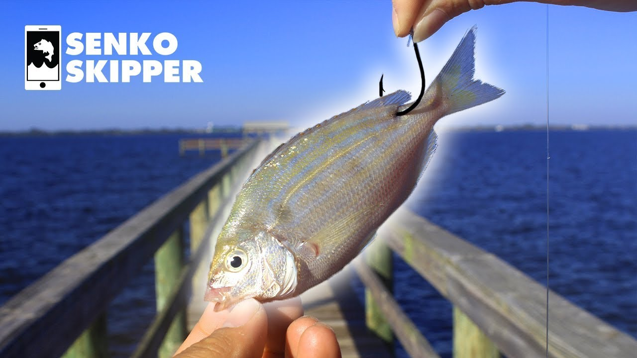 Pier Fishing: The EASIEST Way to Catch Big Fish from the Pier
