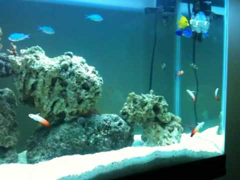 55 Gallon Saltwater Aquarium Check It Out And Tell Me What You Guys Think