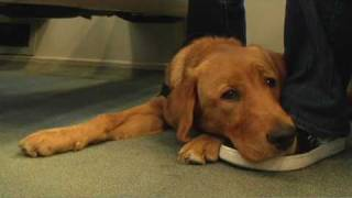 Guide Dog Pup Training Mass Transit S1e16