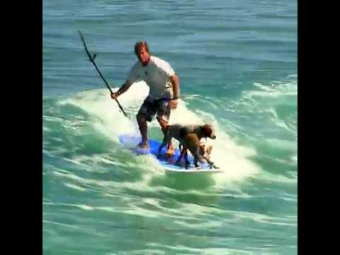 Daily Picks and Flicks Surfing Dogs