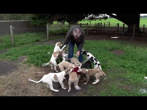 Greyhound care: Interacting with pups