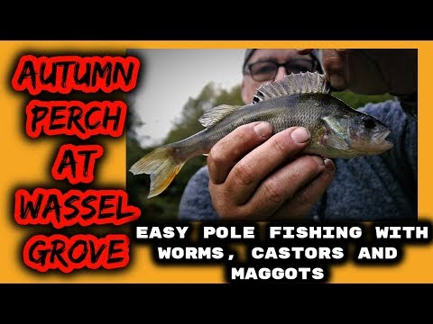 Autumn Easy Pole Fishing ,Perch At Wassel Grove