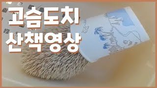 [Vlog] 유기된 고슴도치 산책 영상, 종이컵에서 안…