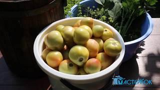 Очень вкусные квашеные помидоры.  Супер рецепт